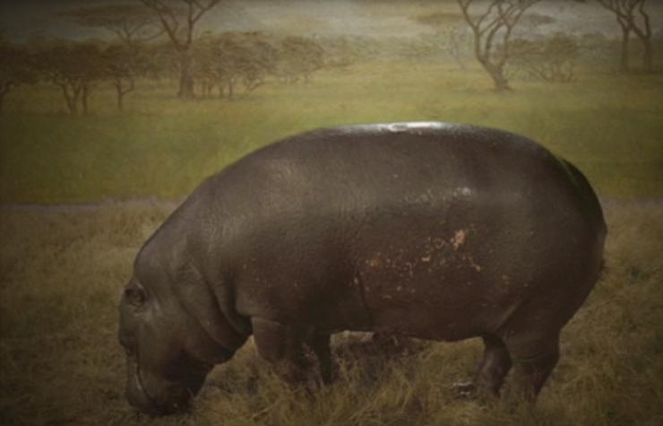 Painting of a hippopotamus