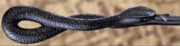 Pettigrews wand - Noble Collection.jpg.png