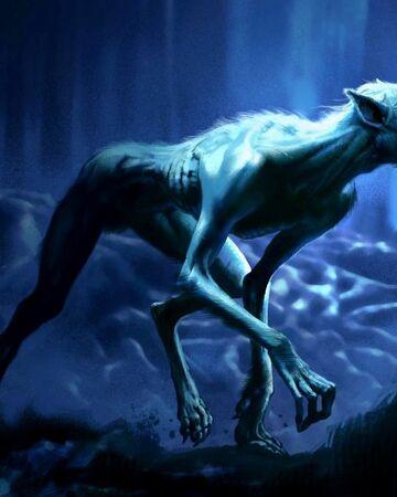 Werewolf Harry Potter Wiki Fandom Fanged geranium are most notable for what? werewolf harry potter wiki fandom