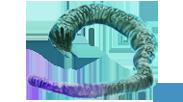 Murtlap tentacle