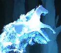 Dapple Grey Stallion