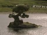 Bowtruckle Island