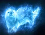 Patronus Otter
