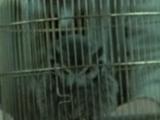 James Potter II's owl