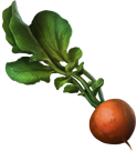 Dirigible plum (pottermore).png
