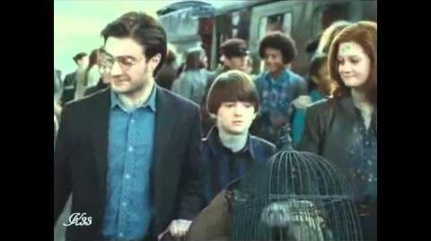 Harry Potter 7►19 Years Later