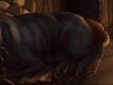 Boarhound