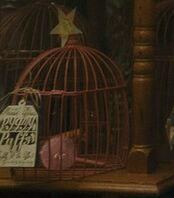 Pygmy puff inside the cage.jpg
