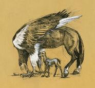 Hipogryf - ilustracje Olivii Lomenech Gill