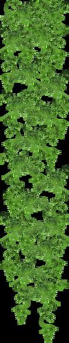 Nav-Botanique lierre 1.png