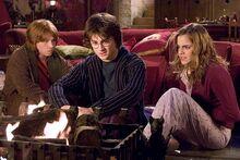 Harry hermiona czara.jpg