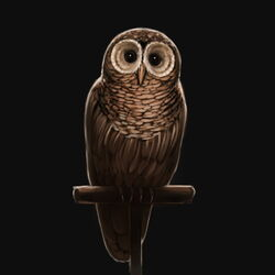 PM-Illustration-OwlBrown.jpg