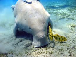 User dugong hate