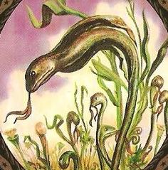 Plante cobra