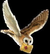 Brown Owl (HPR1)