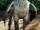 Buckbeak (Lord Caesar)