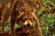Ender lobo