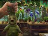 תורת הצמחים