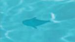 RF4Small Fish