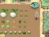 Crops (RF4)
