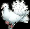 OkosanBirdHeavenstrikeRivals
