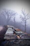Foggy edge
