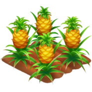 Pineapple Stage 4