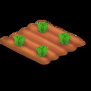 Lettuce Stage 2