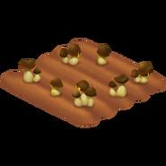 Mushroom Stage 2