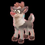 Grey Reindeer Calf