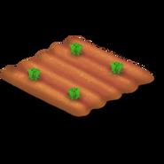 Lettuce Stage 1