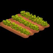 Strawberry Stage 2