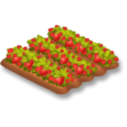 Strawberry Stage 4