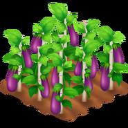 Eggplant Stage 4