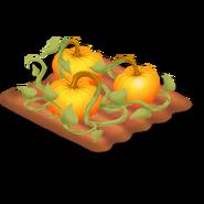 Pumpkin Stage 4