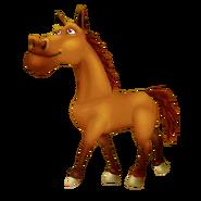 Bay Horse Walking