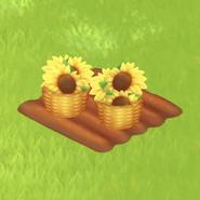 Sunflower Stage 5