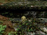 Ee-burma1-skull2