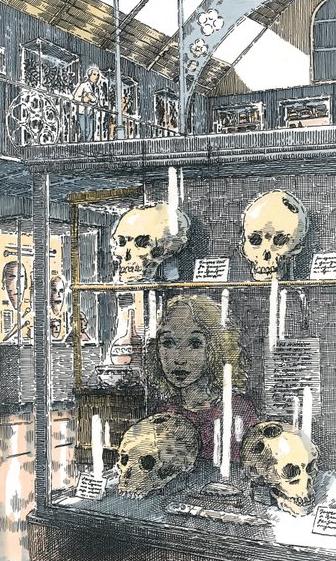 Pitt-Rivers museum trepanned skulls.jpg