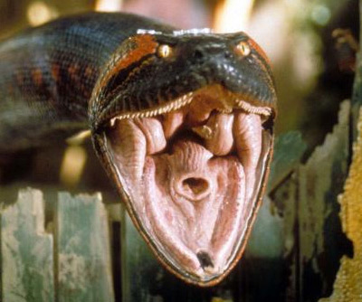 Glossary:Anaconda