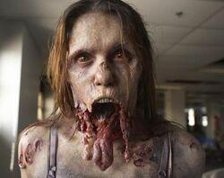 Walking Dead 1x04 001.jpg