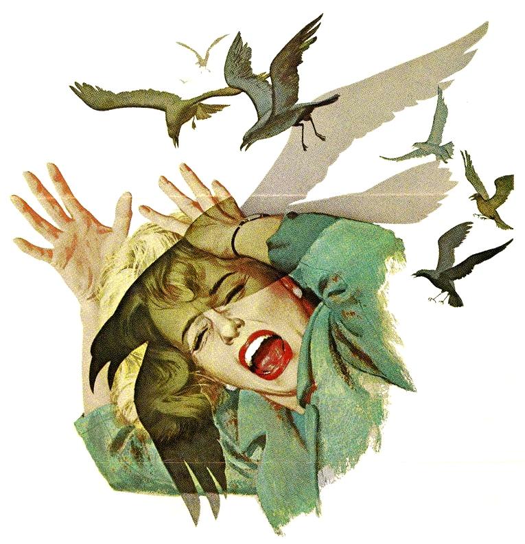 Glossary:Bird wrangler