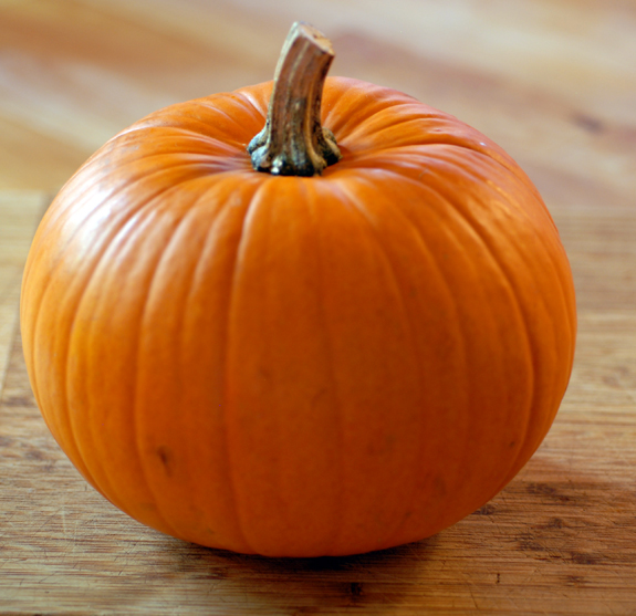 Glossary:Pumpkin