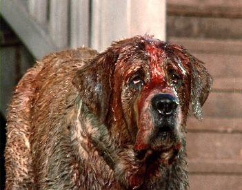 Cujo the dog
