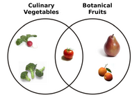 File-Botanical Fruit and Culinary Vegetables.png