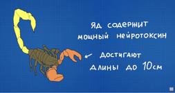 Арабский скорпион.png