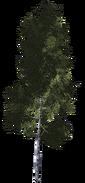 Дерево 1