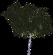 Дерево 9