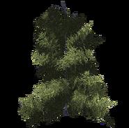 Дерево 10