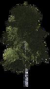 Дерево 8